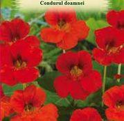 Seminte flori Condurul doamnei (Tropaeolum nanum) rosu - Alaska Scarlet 1g