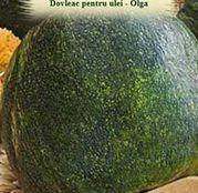 Seminte Dovleac pentru ulei Olga 2g