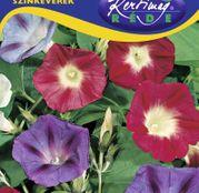 Seminte flori Zorele (Ipomea purpurea) amestec de culori 2g