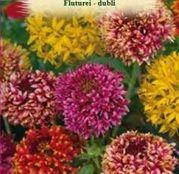 Seminte flori Fluturei dubli (Gaillardia pulchella) mix de culori 0.5g