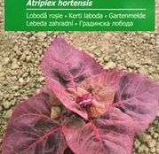 Seminte Loboda rosie (Atriplex hortensis) 1g