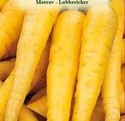 Seminte Morcov Lobbericher 4g
