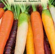 Seminte Morcov Rainbow mix F1 2g
