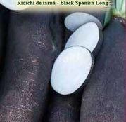 Seminte Ridichi de Iarna - Black Spanish Long 5g