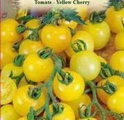 Seminte tomate (rosii) Yellow Cherry 0.4g