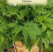 Seminte Valeriana (Valeriana officinalis) 0.1g