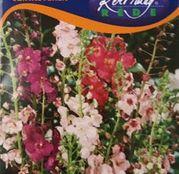 Seminte flori Coada mielului (Verbascum phoeniceum) 0.25g