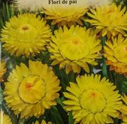 Seminte Flori de Pai galbene 0.4g