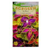 Seminte flori Urzicuta decorativa (Coleus blumei) amestec de culori