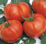 Seminte tomate bulgaresti Rila F1 (250sem)