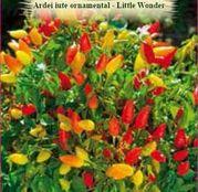 Seminte Ardei iute ornamental Little Wonder (Capsicum annuum) 0.5 g