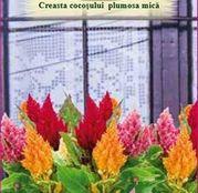 Seminte flori Creasta cocosului mica (Plumosa) mix de culori 0.5g