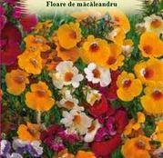 Seminte Floare de Macaleandru (Nemesia strumosa) mix 0.2 g