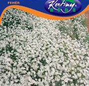 Seminte flori Lana Caprelor (Cerastium tomentosum) 0.25g