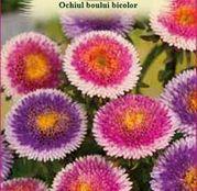 Seminte Ochiul boului bicolor (Callistephus chinensis) mix 0.4g