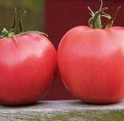 Seminte tomate (rosii) Aphen F1