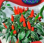 Seminte ardei Chili Etna ornamental 20 sem.