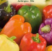 Seminte Ardei Gras Mix 0.5g