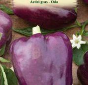 Seminte Ardei Gras Oda 0.4g