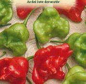 Seminte Ardei Iute decorativ- 7 seminte