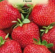 Seminte Capsuni ( Fragaria ananassa) 15 sem.