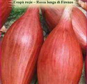 Seminte Ceapa Rosie - Rossa lunga di Firenze 2g