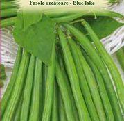 Seminte Fasole Urcatoare Blue Lake 10g