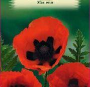 Seminte flori Mac rosu (Papaver Orientale) 0.4g
