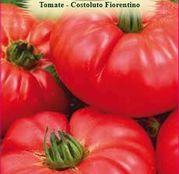 Seminte Tomate Costoluto Fiorentino 1g