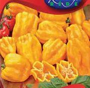 Seminte ardei Chili Habanero portocaliu 20 sem