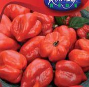 Seminte ardei Chili Habanero rosu 20 sem.