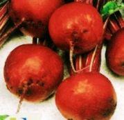 Seminte Sfecla rosie Detroit 2 25 g