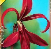 Bulbi de flori Sprekelia Formosissima 1buc