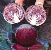 Seminte varza rosie Primero F1 1000 seminte