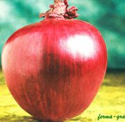 Seminte ceapa Redwing F1 250.000 seminte