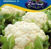 Seminte conopida Snowball X 1g