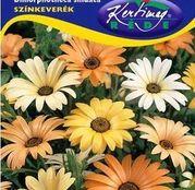 Seminte flori Dimorfoteca (Dimorphoteca sinuata) amestec de culori 0,5g