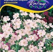 Seminte flori Floarea Miresei (Gypsophila elegans) roz 2g