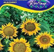 Seminte flori Floarea Soarelui decorativa Pitica Alacsony (Helianthus annuus) 2g