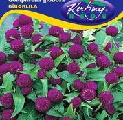 Seminte flori Gomfrena (Gomphrena globosa) mov 0.25g