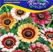 Seminte flori Margarete (Chrysanthemum carinatum) amestec de culori 1g