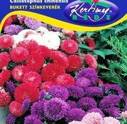 Seminte flori Ochiul boului (Callistephus chinensis) Bukett - amestec de culori 1g