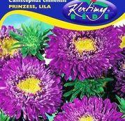 Seminte flori Ochiul boului (Callistephus chinensis) Princess - mov 1g