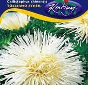 Seminte flori Ochiul boului (Callistephus chinensis) Strahlen alb 1g