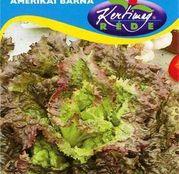 Seminte salata Brun American 3g