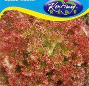 Seminte salata Lollo Rossa 2g
