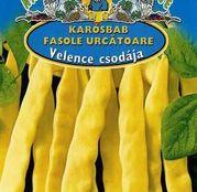 Seminte fasole Velence Csodája (Minunea Venetiei) 30g