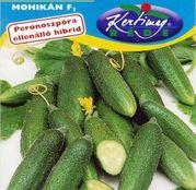 Seminte castraveti Mohikán F1 1g