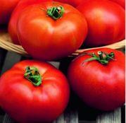 Seminte tomate (rosii) Hector F1 1000seminte