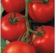 Seminte tomate (rosii) Tamaris F1